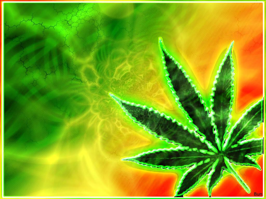 king ganja leaves green